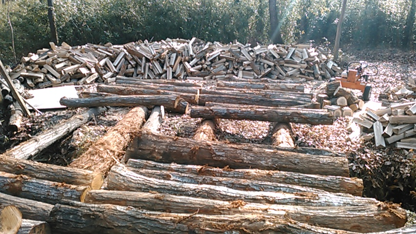 Logs and split trees
